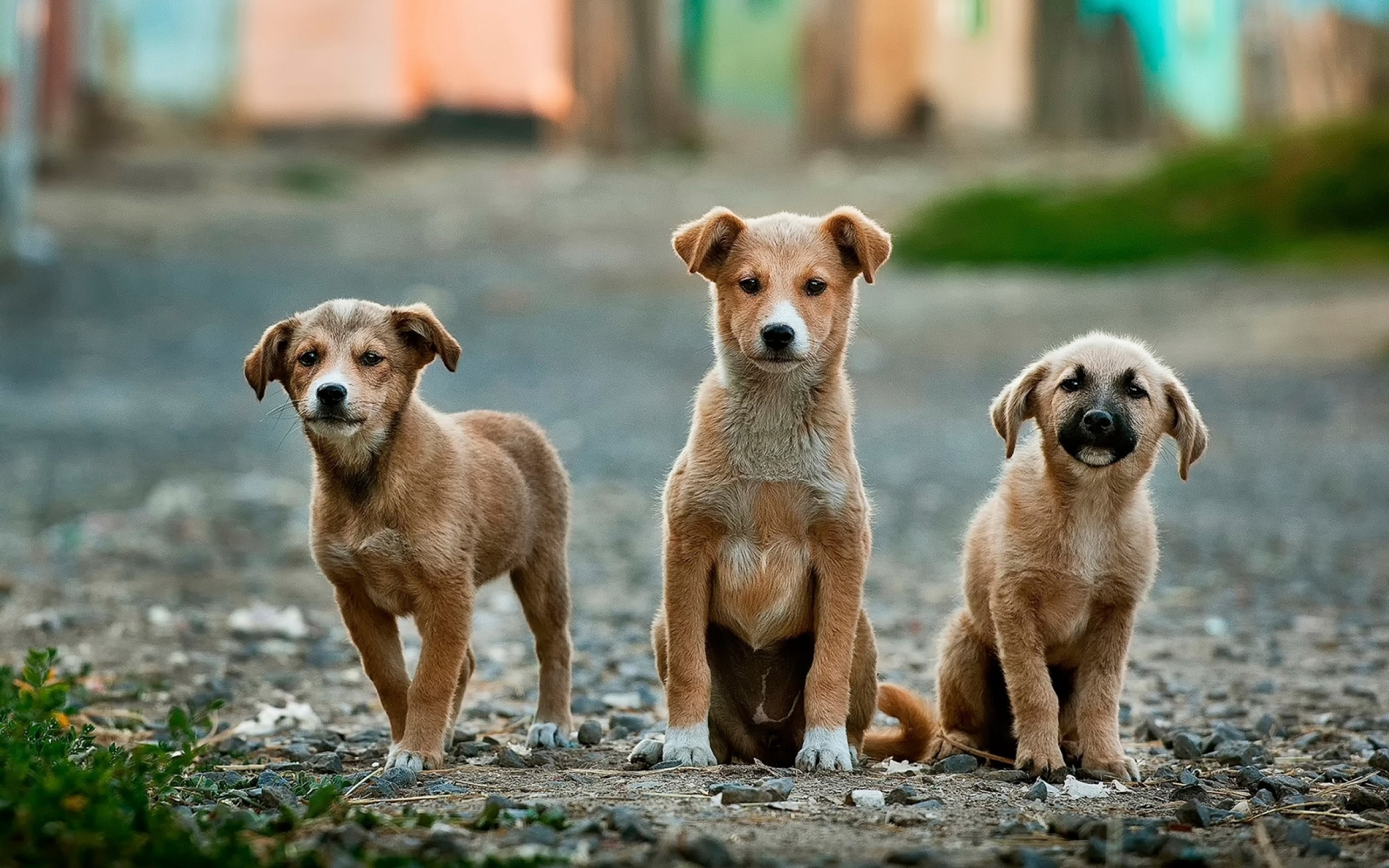 Donate to a charity that helps animals